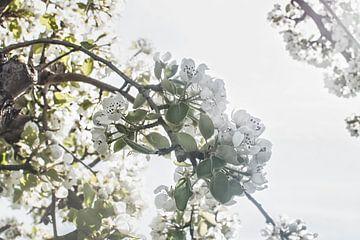 Appelbloesem in de zon van Elianne van Turennout