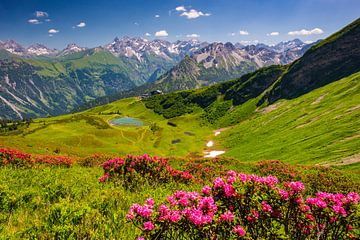 Alpenrosenblüte  am Fellhorn von Walter G. Allgöwer