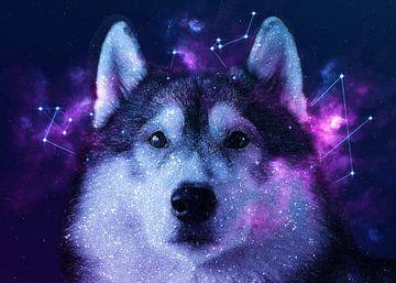 Galaxy Siberian Husky van Lemo Boy