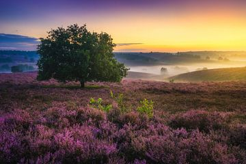 Posbank Sonnenaufgang von Albert Dros