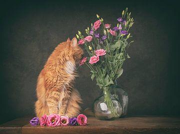 kat ruikt aan de bloemen van mirka koot