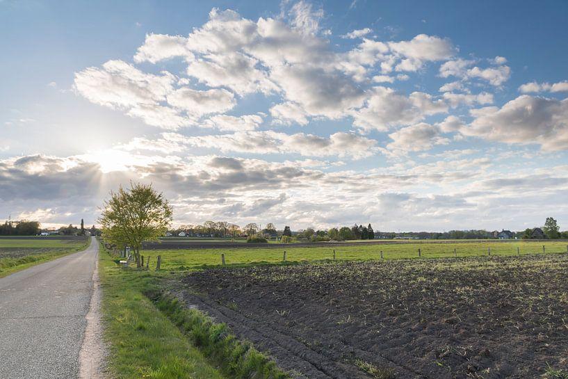 Last sunlight van Jan Koppelaar