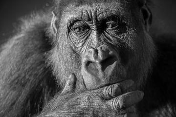 Gorille en gros plan portrait en noir et blanc sur Sjoerd van der Wal