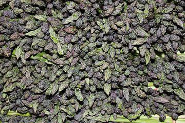 Bos paarse asperges van Anna van Leeuwen