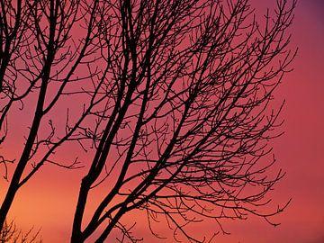 Ein roter Sonnenaufgang i m Januar von Martijn Wit