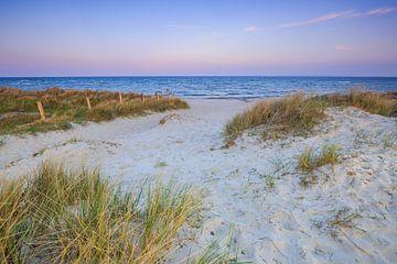 Wind in den Ostsee-Dünen von Ursula Reins