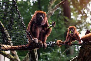 Mutter und Affenbaby