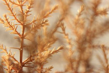Nahaufnahme von braunen Zweigen im Herbst