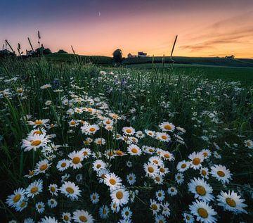 Gänseblümchen Flower Power_I von Joris Pannemans - Loris Photography