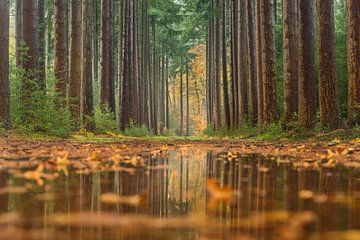 herfst reflecties van Bart Harmsen