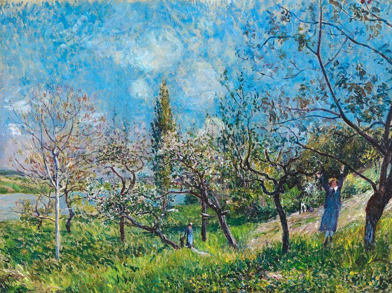 Boomgaard in het voorjaar, Alfred Sisley van Meesterlijcke Meesters