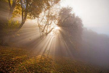 rayons lumineux d'automne dans le brouillard sur le Jura Souabe sur Jiri Viehmann