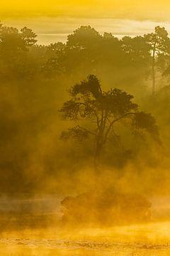 eenzame boom in de mist van eric brouwer