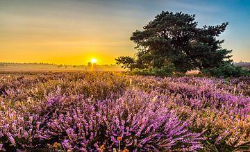 Sonnenaufgang auf der Heide die Rendering-Klippen von Eelke Brandsma