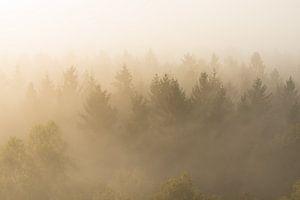 Naaldbomen in de mist