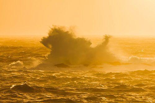 Leeuw in de golven van