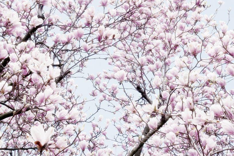 Magnoliabloesem lentebloesem I van Jessica Berendsen