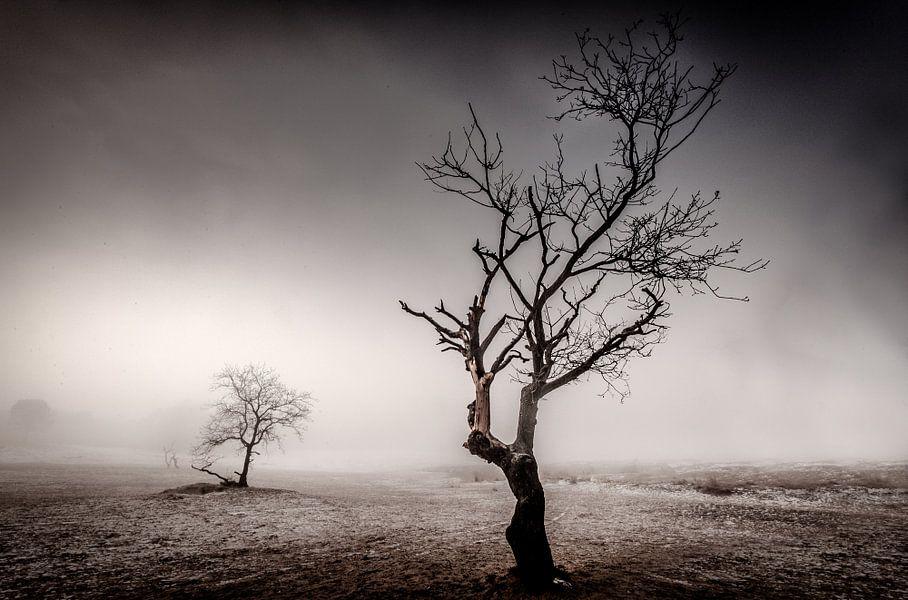 Desolate van Ruud Peters