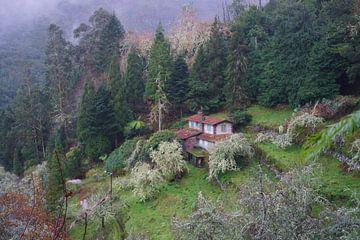 Huis in het bos van Michel van Kooten