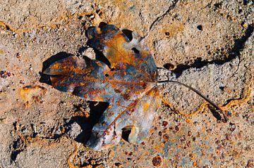 Rusty leaf III van LYSVIK PHOTOS