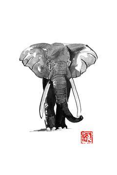 olifantenloop van philippe imbert