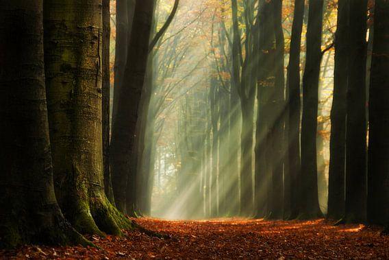 The Light van Martin Podt