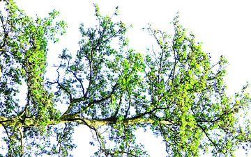 Tree Magic 133 van MoArt (Maurice Heuts)