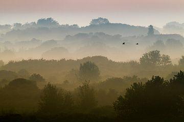 Aalscholvers vliegend boven duinen met mist van Menno van Duijn