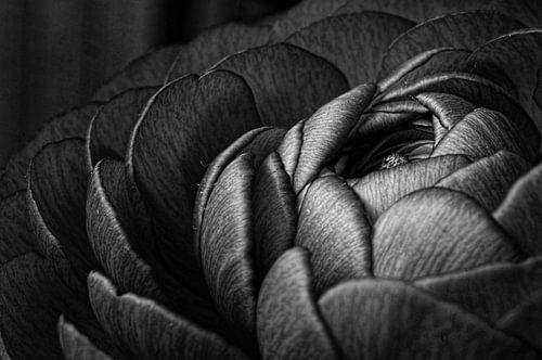 Buttercup Black & White