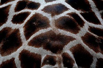 giraffe vacht von miranda  Leenheer