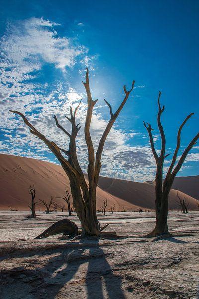 Dode boom met tegenlicht in Dode vallei, Namibië van Rietje Bulthuis
