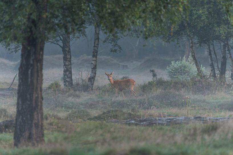 Reegeit (Capreolus capreolus) - Roe deer van Eric Wander