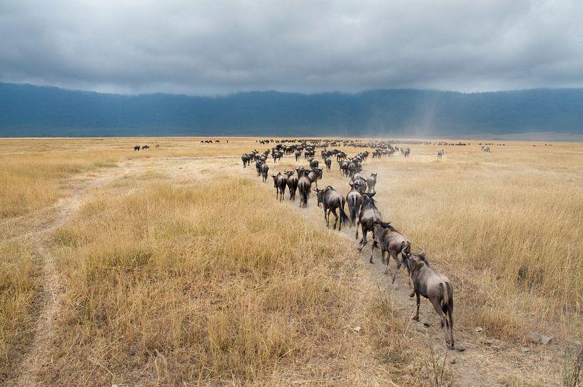 Gnoe of Wildebeesten in savanne van Afrika van Herman van Ommen