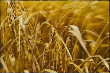 Getreide von Christine Nöhmeier
