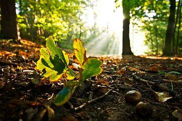fallen leaf  sur