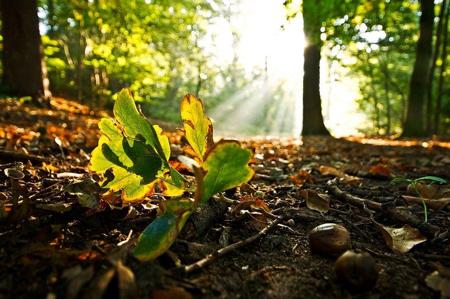 fallen leaf  van Dirk van Egmond