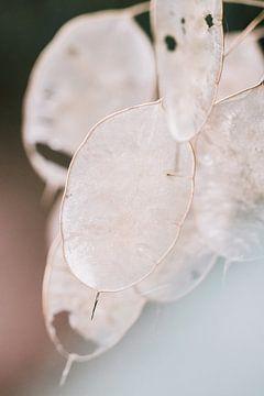 Samenkisten im Herbst von Lindy Schenk-Smit