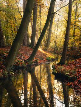 De symphonie van de natuur van Joris Pannemans - Loris Photography