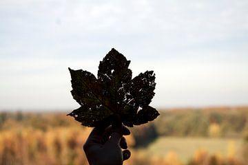 Herfstblad met bosrand op achtergrond van David Klumperman