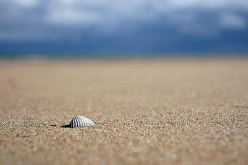 Eenzame schelp op een zanderig strand van