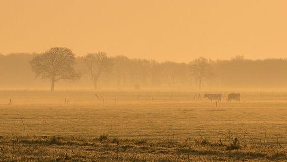 koeien in vroege ochtend