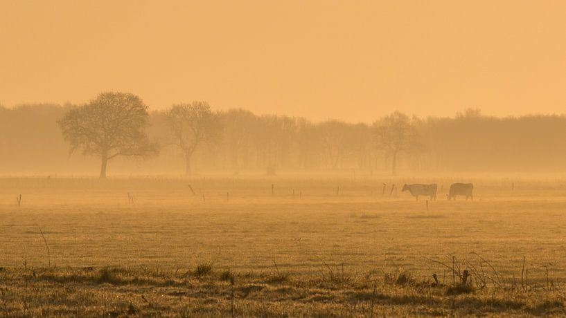 koeien in vroege ochtend van Martzen Fotografie