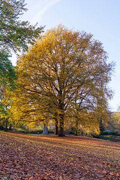 L'automne dans les Bremer Wallanlagen, Allemagne, Europe