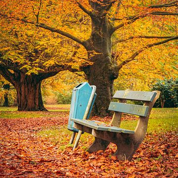 Herfstdag in het park van Douwe Schermer