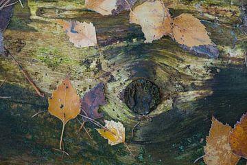 Herfstbladeren op dood hout van Ron Poot