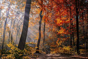 Autumn light painting sur