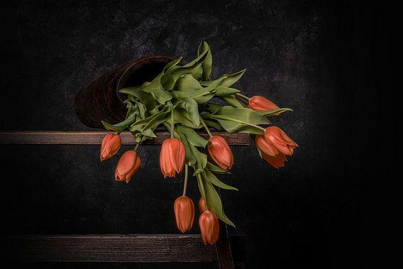 oranje gevallen tulpen