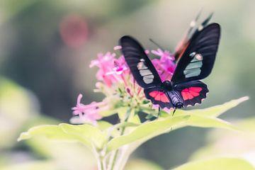Schmetterling von Hennie Zeij