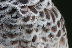 Vogel veren van