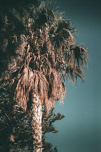 palmboom op een zomers eiland